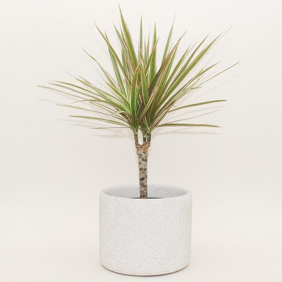 Pebble Stone Large Plant Pot
