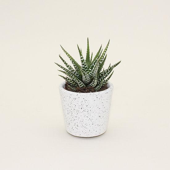 White Granite Small Plant Pot