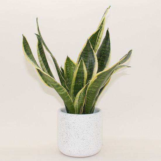 White Granite Medium Plant Pot