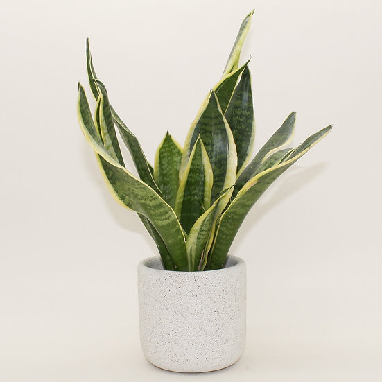 Pebble Stone Medium Plant Pot