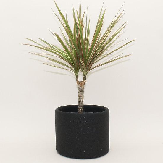 Black Granite Large Plant Pot