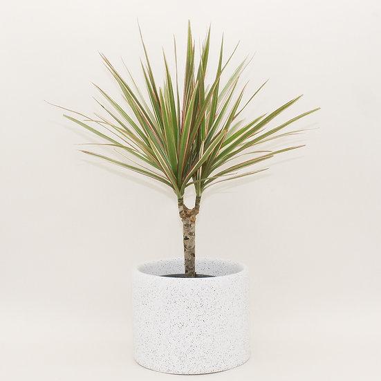 White Granite Large Plant Pot