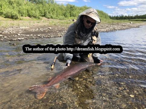Рыбалка на тайменя р. Северная