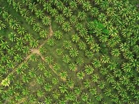 Coconut trees_0408.jpg