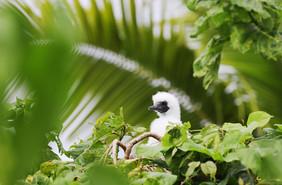 Nanuku Birds_3587 web.jpg