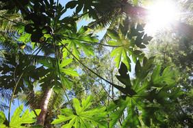 Fiji Canopy_9386 web.jpg
