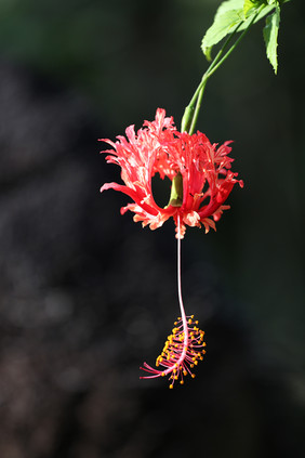 Flower web_8124.jpg
