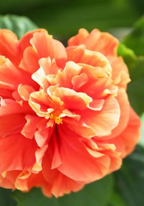 Flower_7742 web.jpg