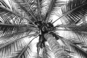 Palm Tree_4631.jpg