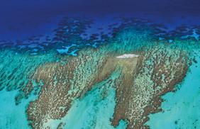 Gallery Reef-9475.jpg
