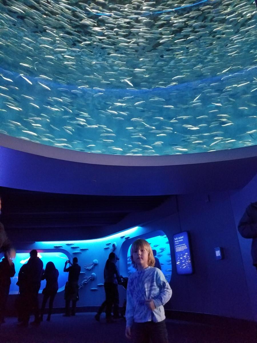 The Monterrey Bay Aquarium