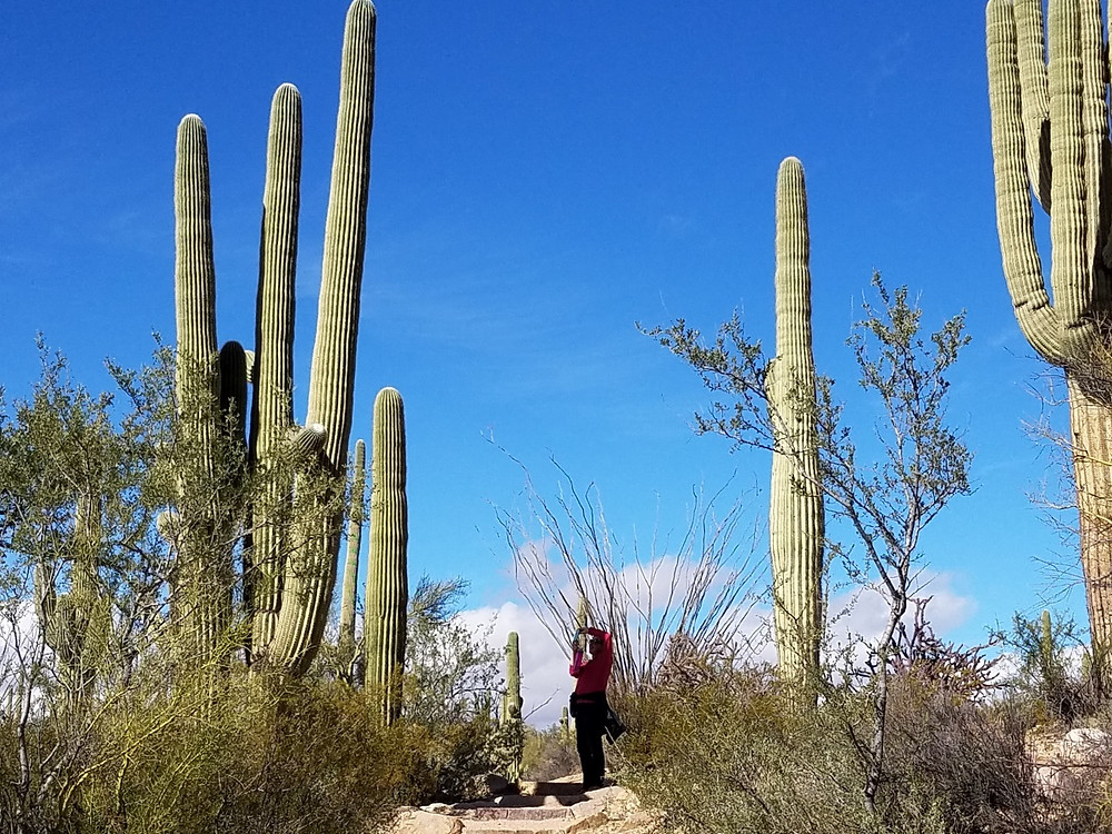 Pam photographing cacti
