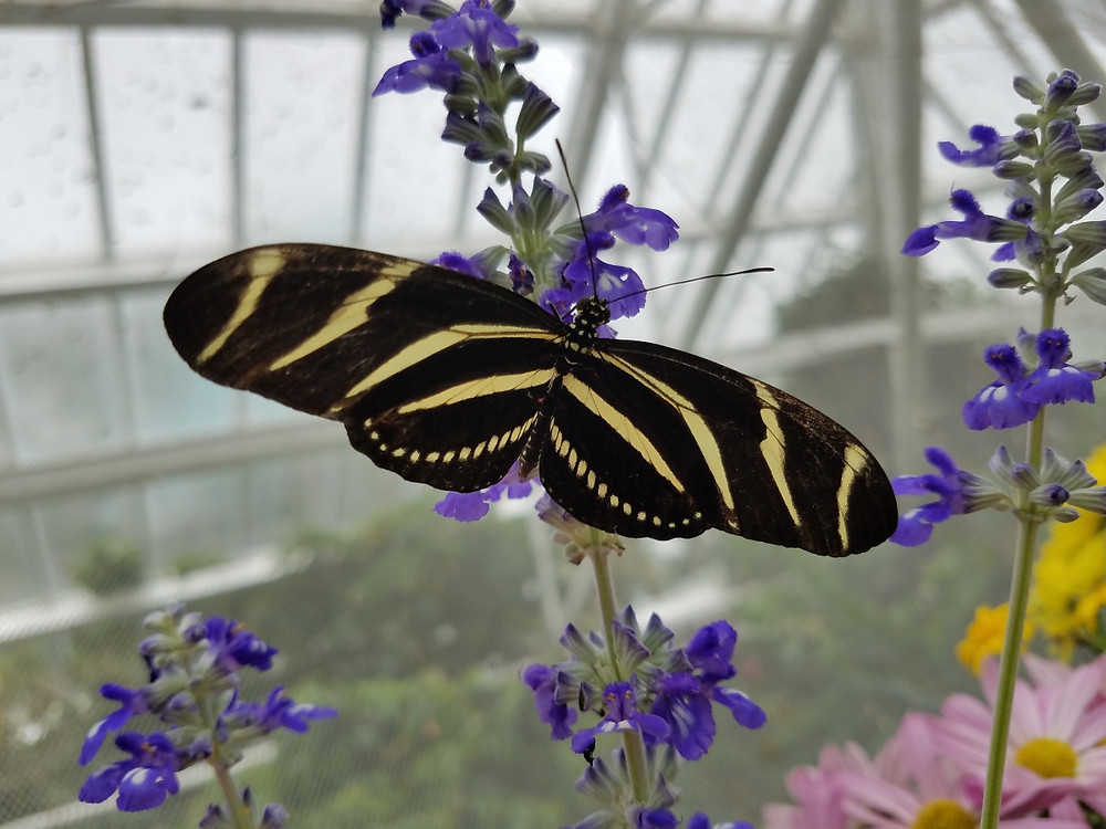 The Butterflies at Moody Gardens