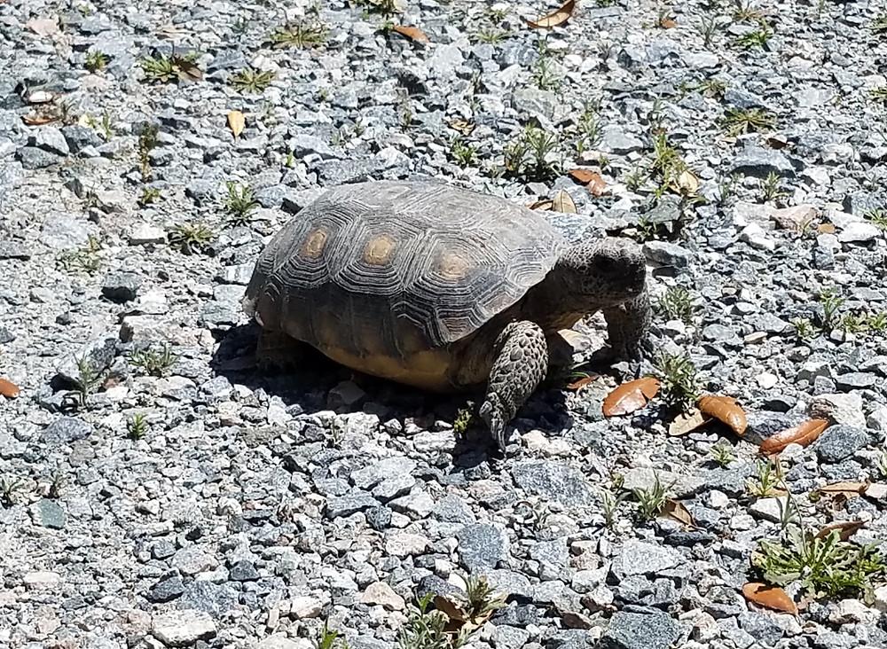 Tortoise Friend!