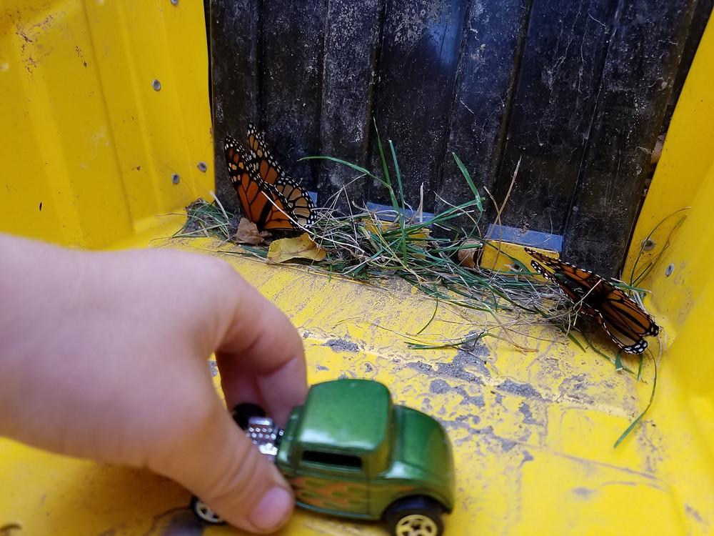 Poor dead butterflies :(
