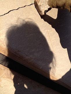 potter shadow.jpg