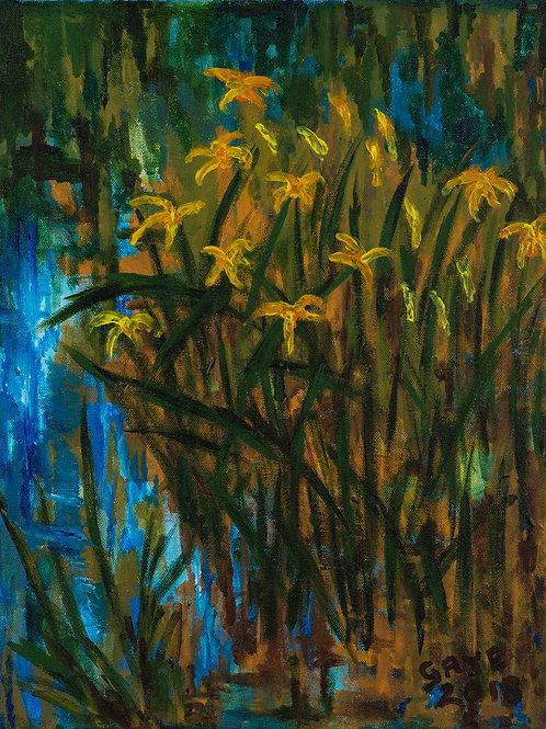 Daffodils by Pond