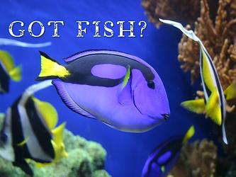 SERMON - GOT FISH.png