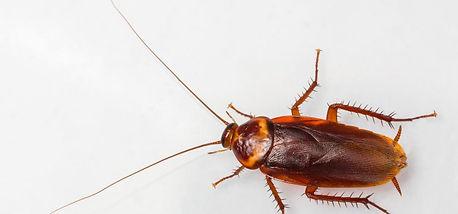 cockroach control pest nett.jpg