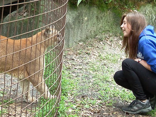 Dangerous Captive Wildlife Owners in Florida aren't Required to Purchase Liability Insurance