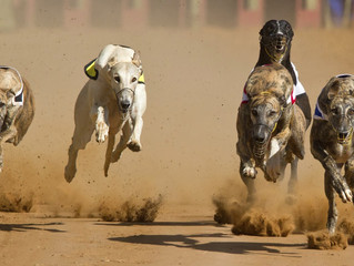 Greyhound Anti-doping Regulations Found Invalid