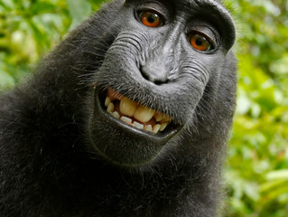 9th Circuit Rejects Monkey's Copyright Claim