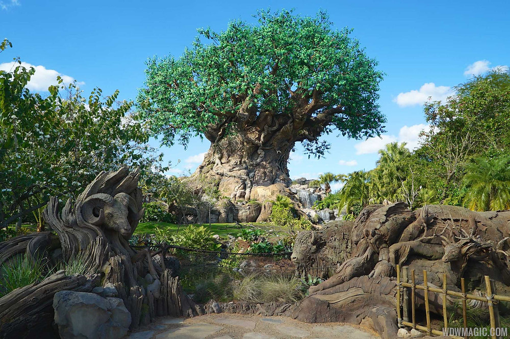The Tree of Life at Disney's Animal Kingdgom