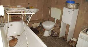 Rabbits hoarded in a bathroom. Photo: Stefan Körner