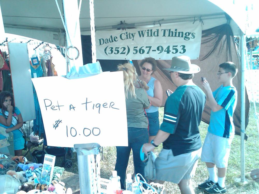 Cub petting at Dade City Wild Things.