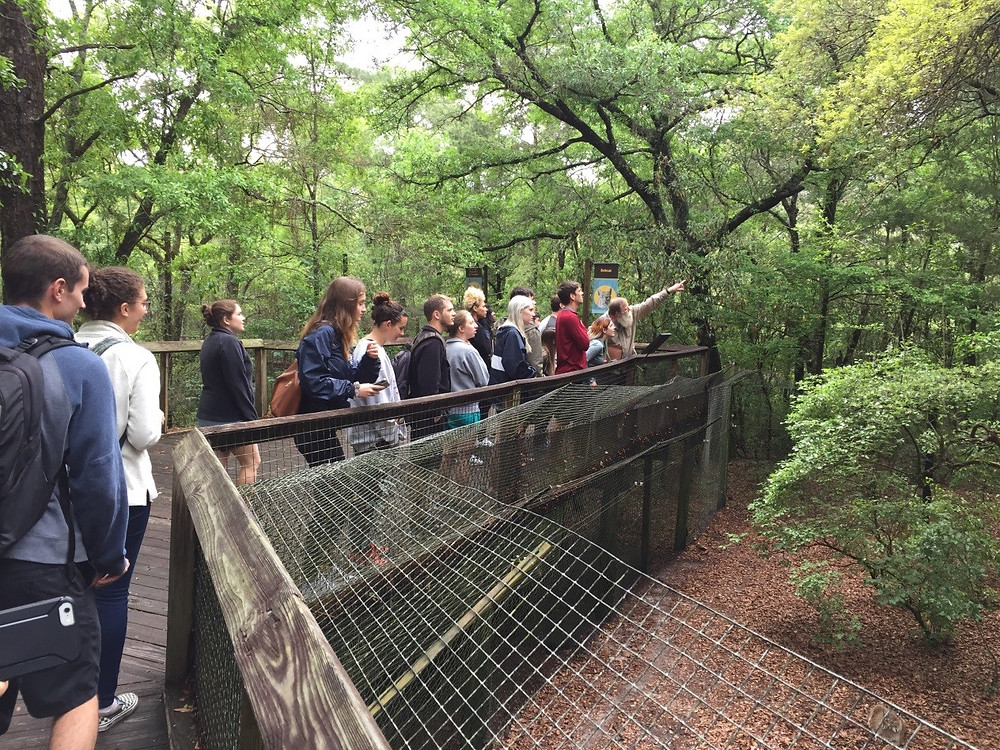 Students learning about and observing tree-climbing grey foxes.