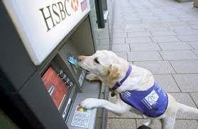 Service dog at ATM