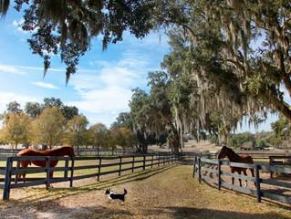 Rural Florida Agricultural LEOs