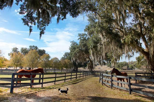 Horses on farm with dog.
