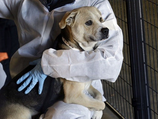 Registry of Animal Abusers to be Considered by Florida Legislature