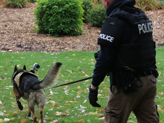 "1st DCA Affirms Collateral Attack on K-9 Who Can Detect Potential ""Suspects"""