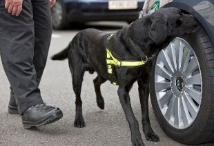 Dog Sniff Conviction Upheld