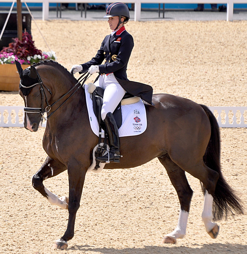 Horse competing in dresssage