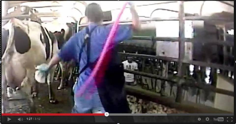 Still of video filmed by Mercy for Animals