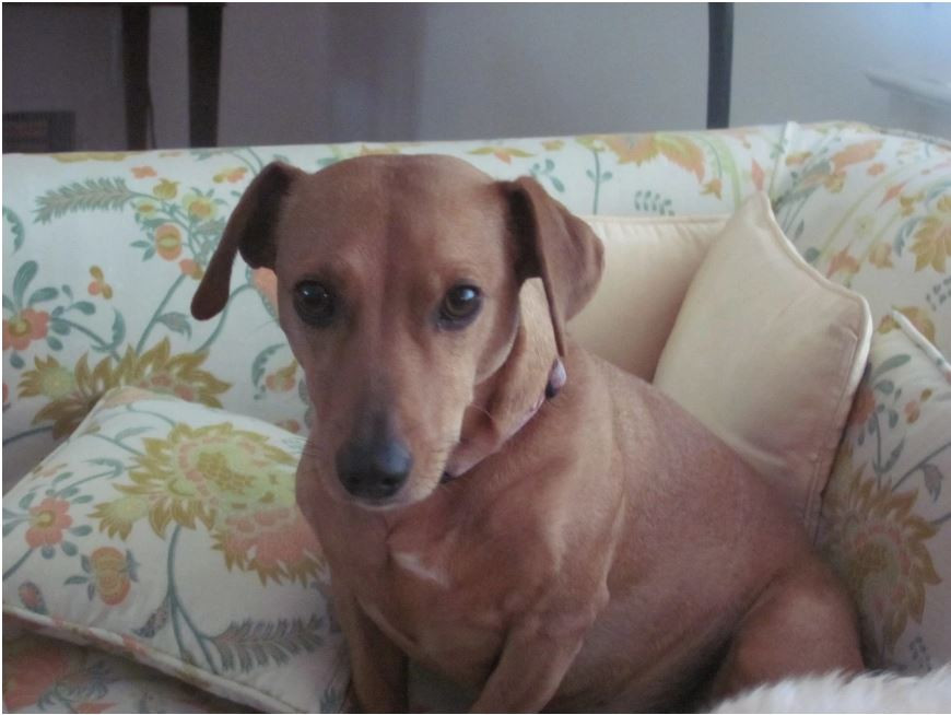 Lola, an 8-year-old dachshund mix, died nine months after a stay at a kennel.