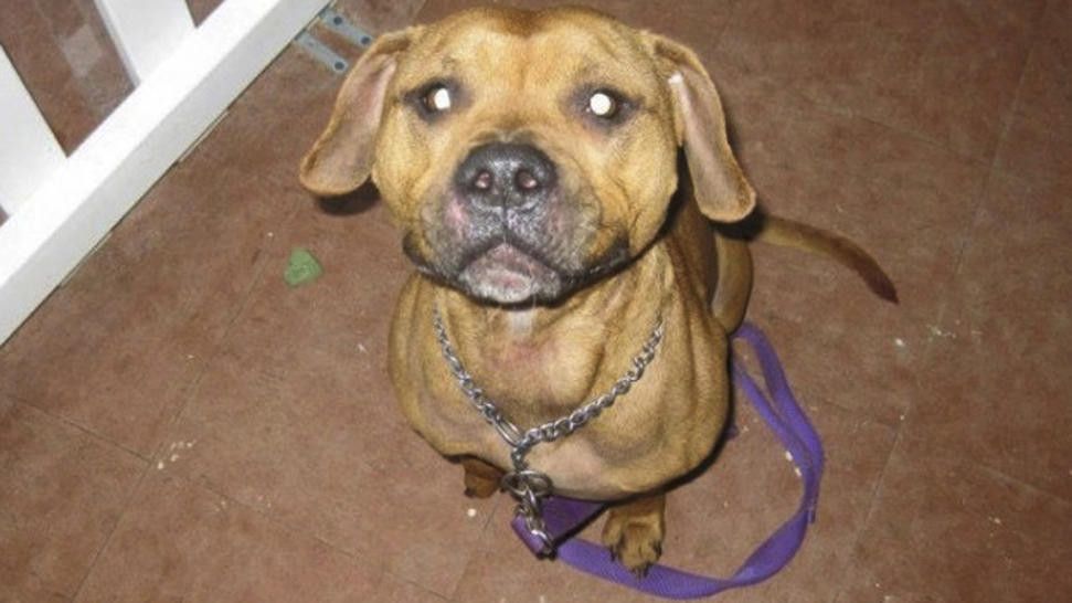 AP Photo of Desmond the dog.
