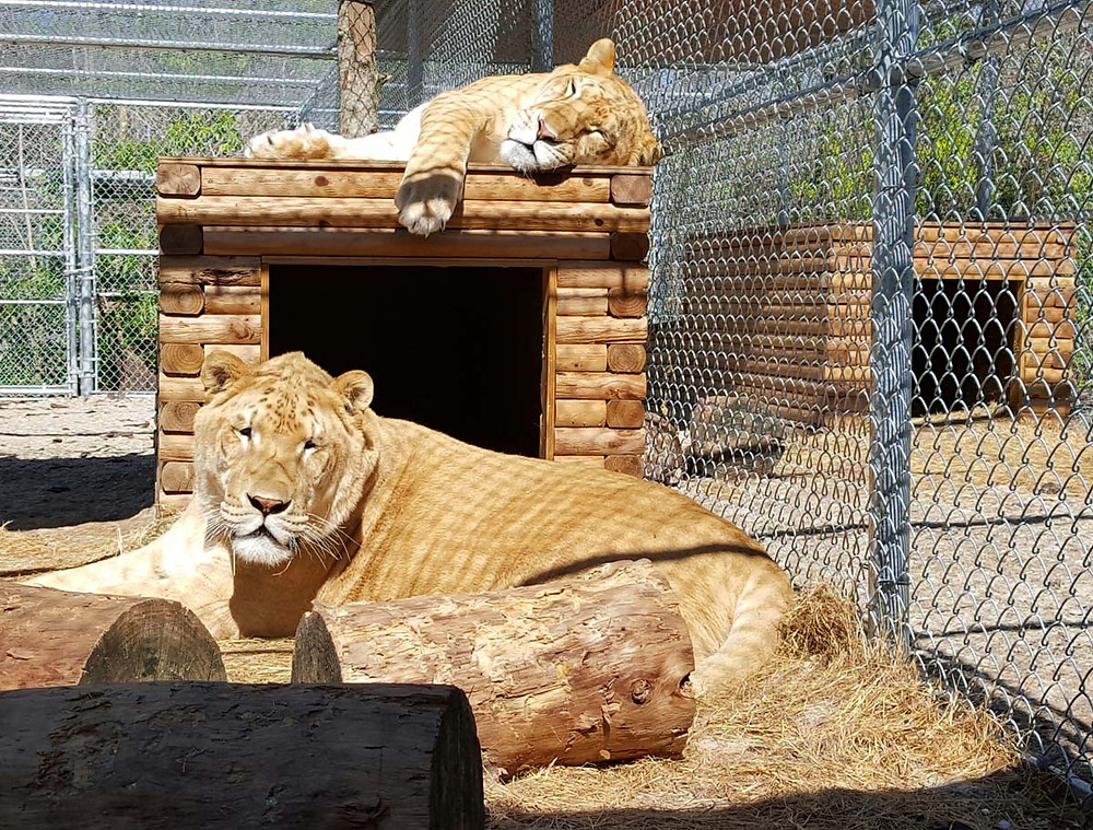 Ares and Yeti lounging in the sun.