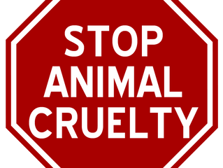 Loxahatchee Animal Cruelty Bust Largest in U.S. History