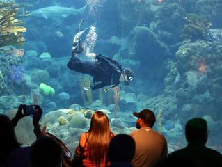 UPDATE: PETA Maintains Animal Abuse Claim Against Florida Aquarium
