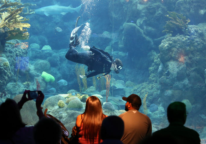 "Florida Aquarium dive master Conrad Allen swims in the aquarium's coral reef tank during a show titled, ""Secret Sea Life Superhero."" The aquarium was the target of animal-rights group complaint in January over the death of a nurse shark there."