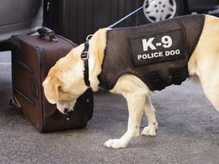 Shelter Dog Adopted and Trained as Electronics-Sniffing Dog