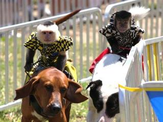 Alachua County Postpones Fairground Animal Regulations