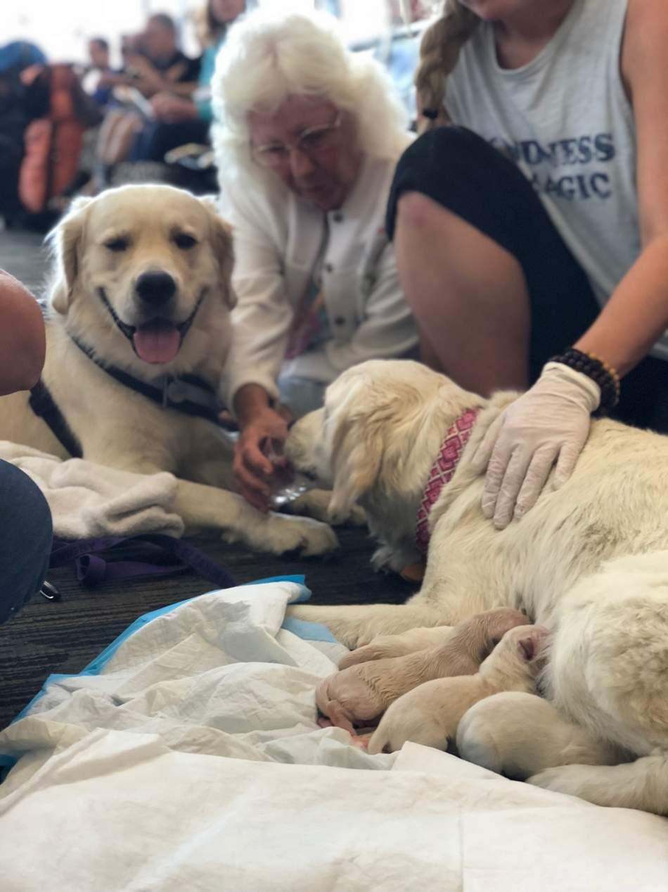 Dog Gives Birth at TIA, Photo by Emily Nipps