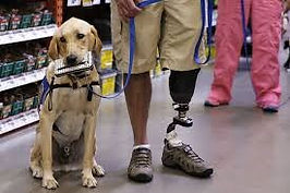 Service dog shopping with handler