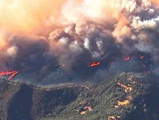Rescue Efforts Include the Animal Victims of Califonia's Valley Fire