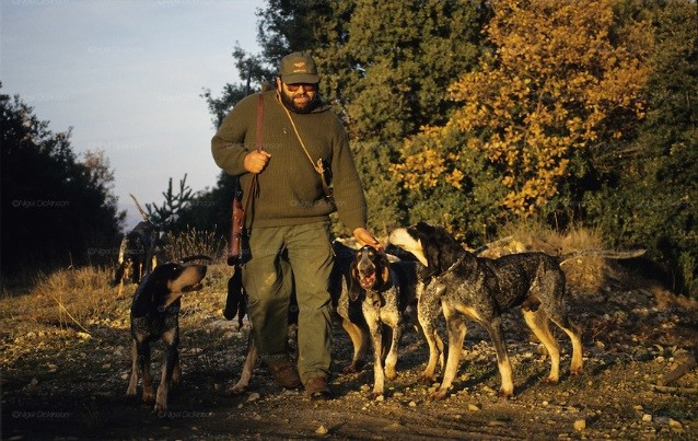 Hunter with dogs.